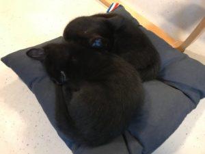 École Montessori Internationale - chatons